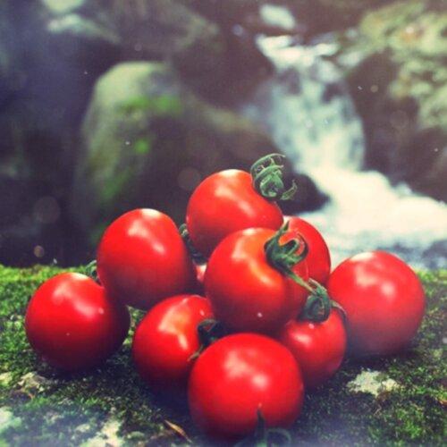 リコピンたっぷりフルティカトマト