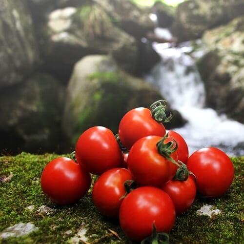 小林農園中玉トマトフルティカ自然