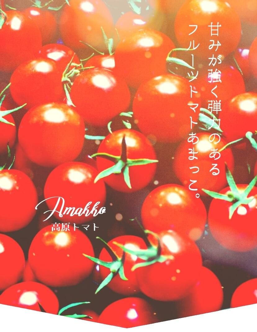 人気のフルーツトマトあまっこ