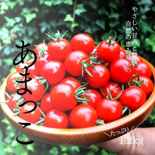 小林農園ミニトマトあまっこ
