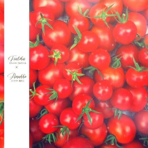 信州根羽村の真っ赤なおいしい高原トマト