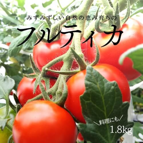 小林農園ミディアムトマトフルティカ1.8ハウス