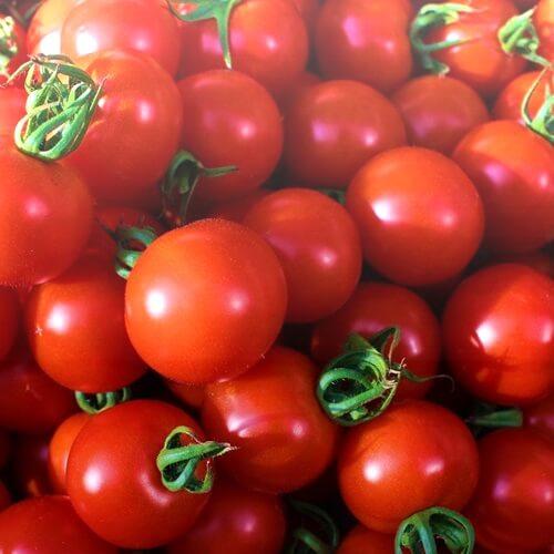 小林農園ミディアムトマトフルティカ大収穫