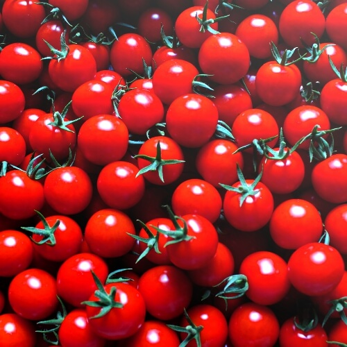 小林農園ミニトマトあまっこ大収穫