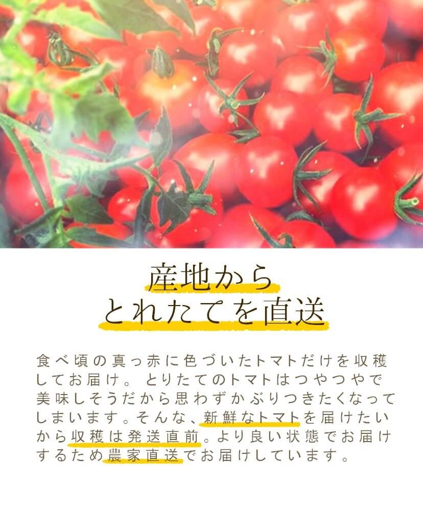 農家直送で新鮮なトマト
