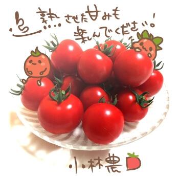 トマトの常温保存方法4