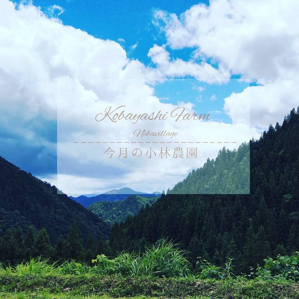 今月の小林農園令和元年8月