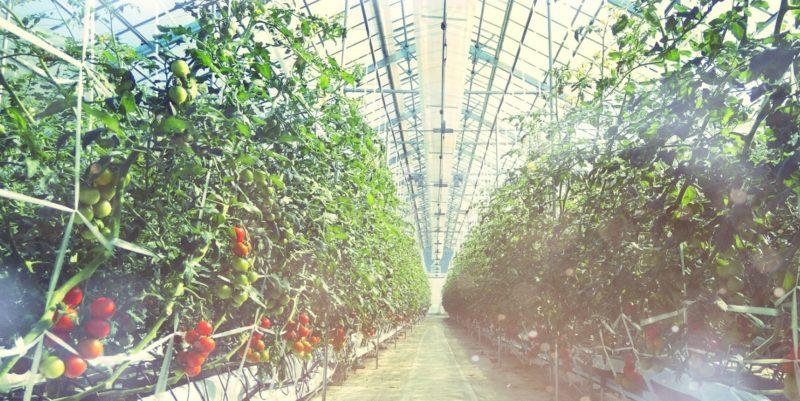小林農園の自然人こどもに安心安全な栽培オーガニックに近づきたい