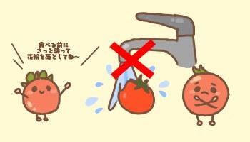 フルーツトマトおいしい保存方法
