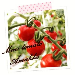 抗酸化作用があるリコピン栄養がとれるトマト