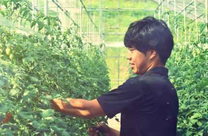 トマト栽培にこだわる園主