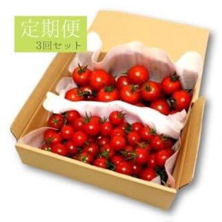 フルーツトマト定期便3回セット