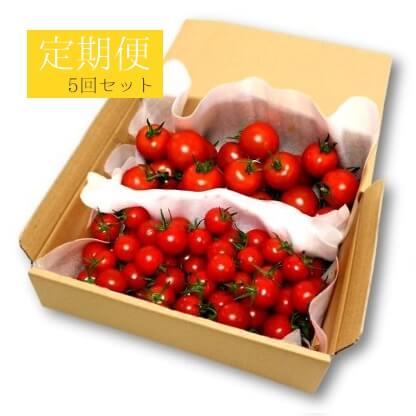 フルーツトマト定期便5回セット