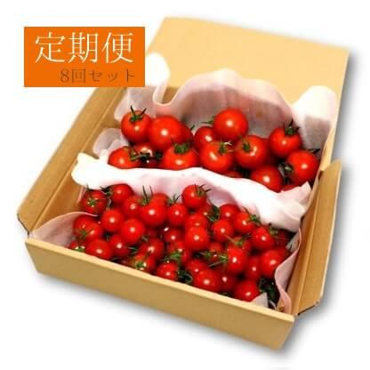 フルーツトマト定期便8回セット