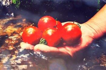天然水育ち自然にやさしいトマトフルティカ